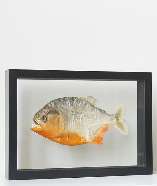 opgezette piranha in lijst