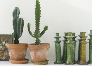 cactussen en tamegroute