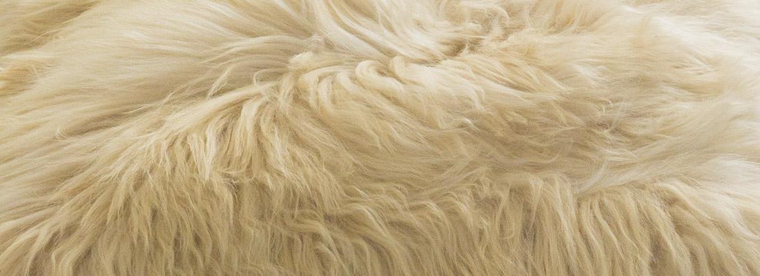 alpaca plaids en kussens