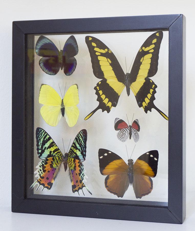 vlinders in lijst
